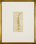 Vincent Colyer - Flowering Stalk. Watercolor