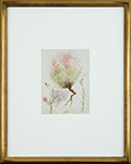 Vincent Colyer - Flowering Stalk. Watercolor.