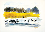 Francis Golden - Coots on Ice. Watercolor painting.